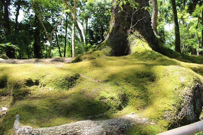 2道の横の苔むした樹木