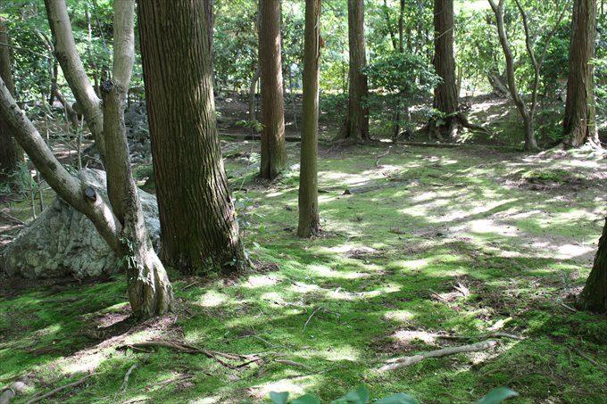 3苔むした森