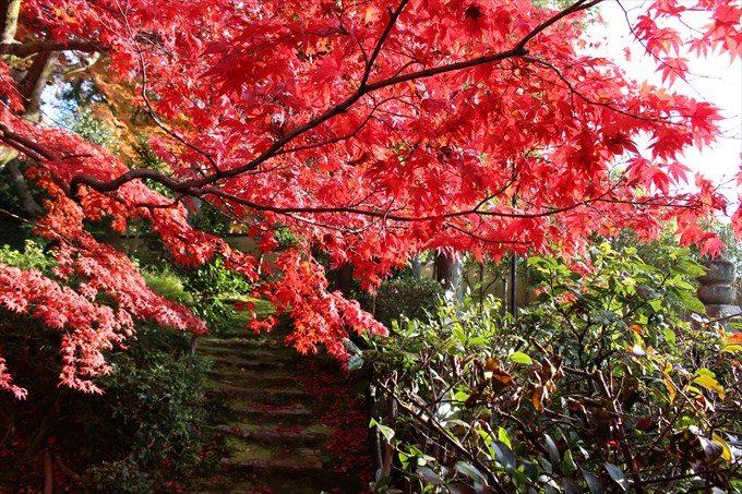 72庭からの階段と紅葉