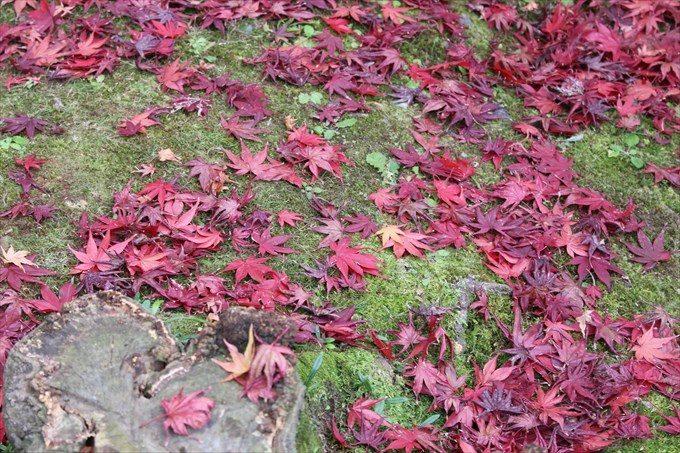 8散り紅葉
