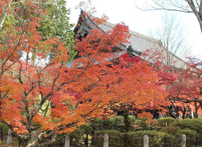 21本堂の屋根と紅葉