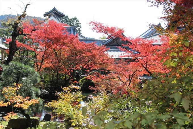 42紅葉と建物