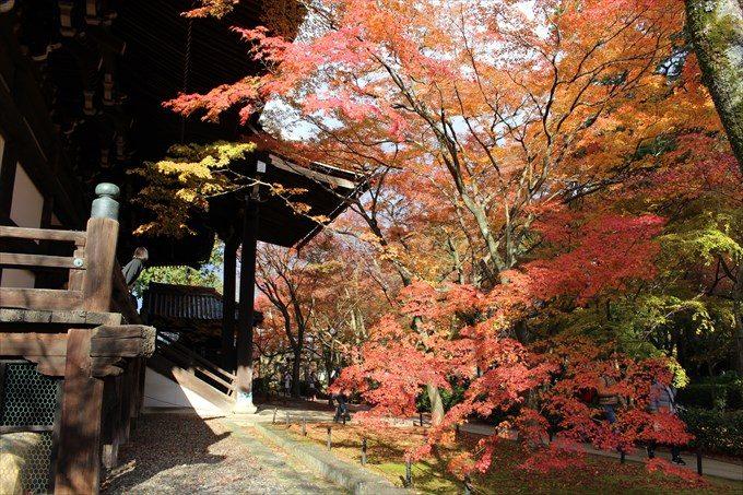 42境内の紅葉と本堂
