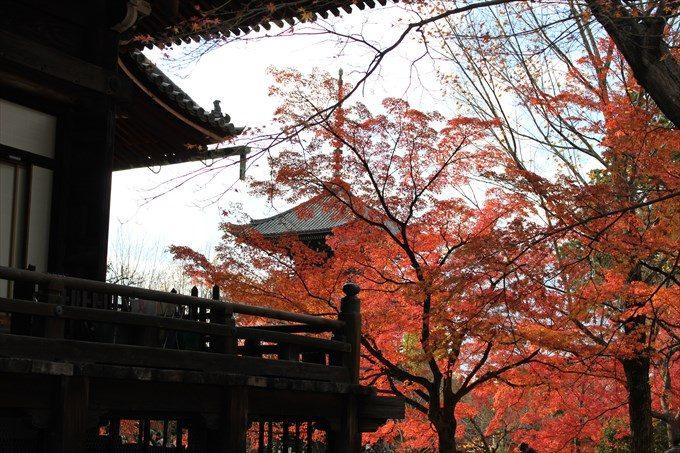 10本堂と紅葉と三重塔