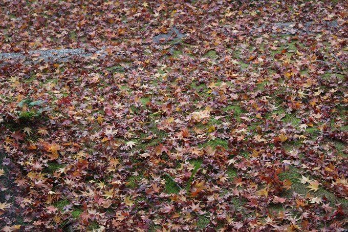 27たくさんの散り紅葉