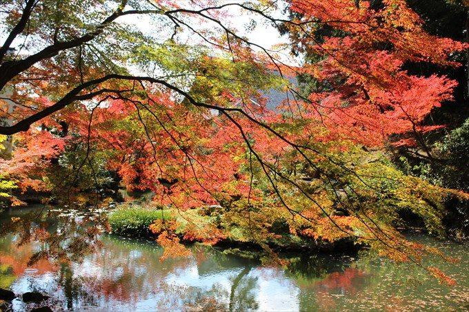 45紅葉と大方丈と池