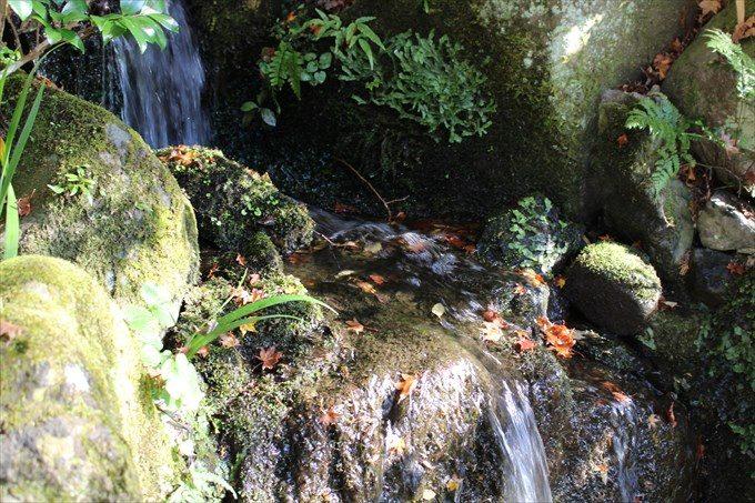 9玄関前の池アップ