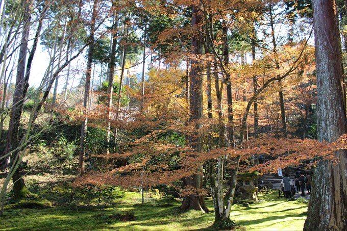 41往生極楽院前の紅葉