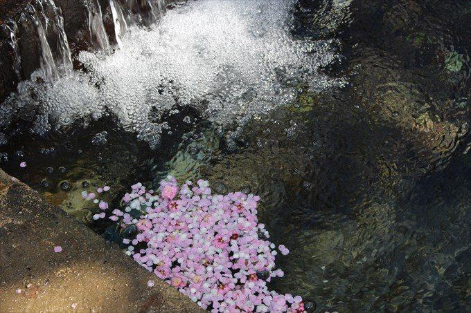28川と梅の花びら