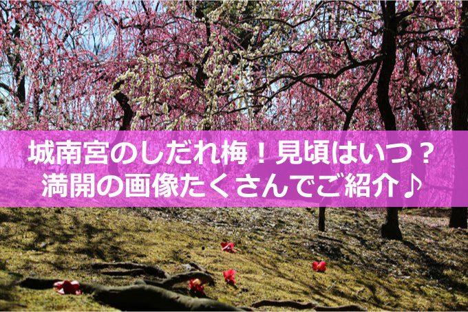 しだれ梅と落ち椿タイトル-01