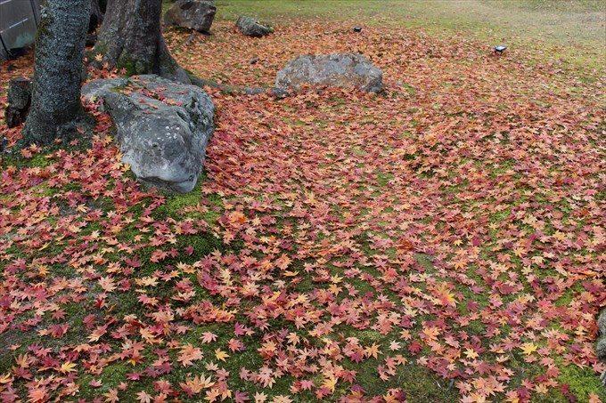高台寺の紅葉絨毯