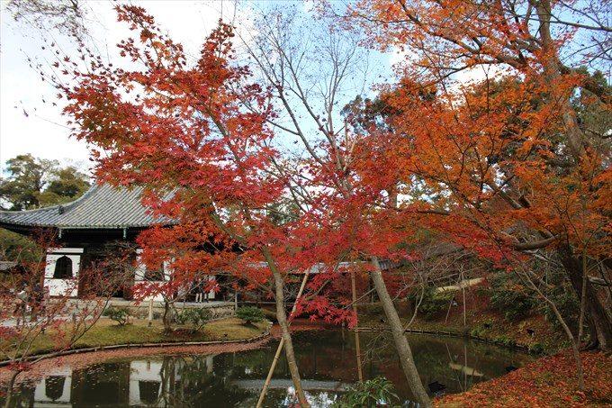 高台寺の紅葉2