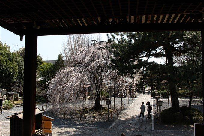 31本堂内部からの阿亀桜