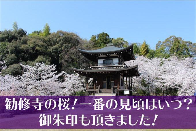 勧修寺の桜タイトル用-01