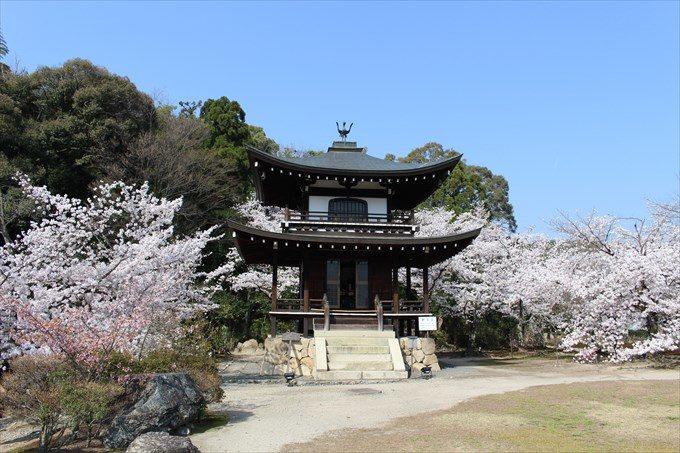 21大悲閣と桜