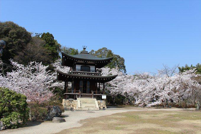 22勧修寺の観音堂と桜