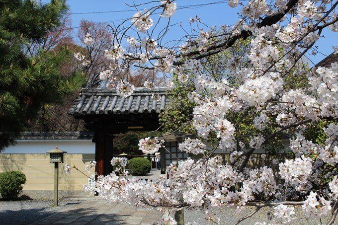 2南門と桜