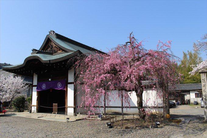 9庫裏と枝垂れ桜