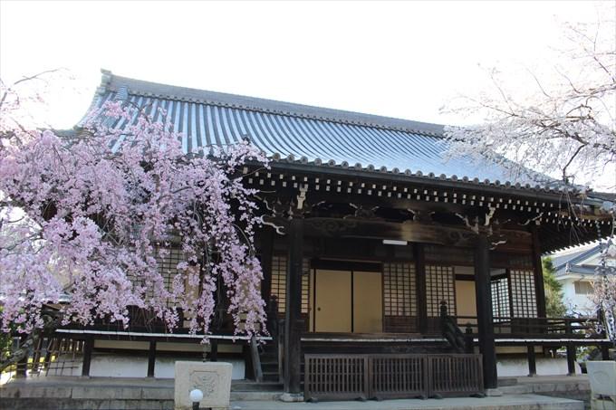 4大書院と桜