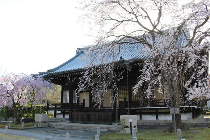 34大書院と桜