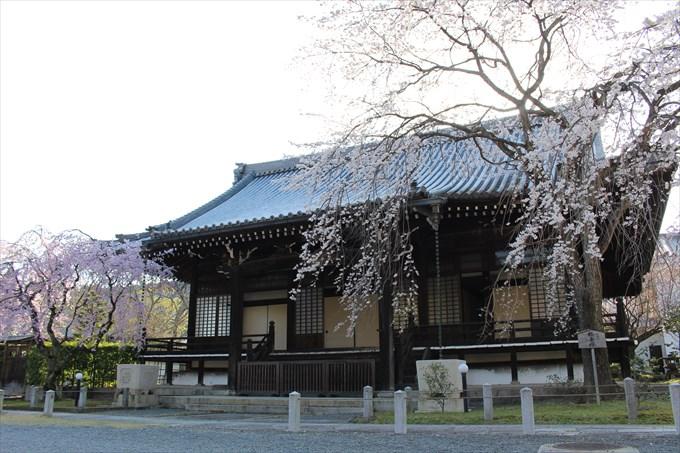 7大書院と桜