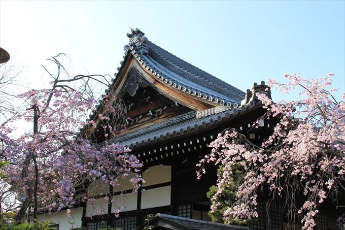 11大書院の屋根と桜