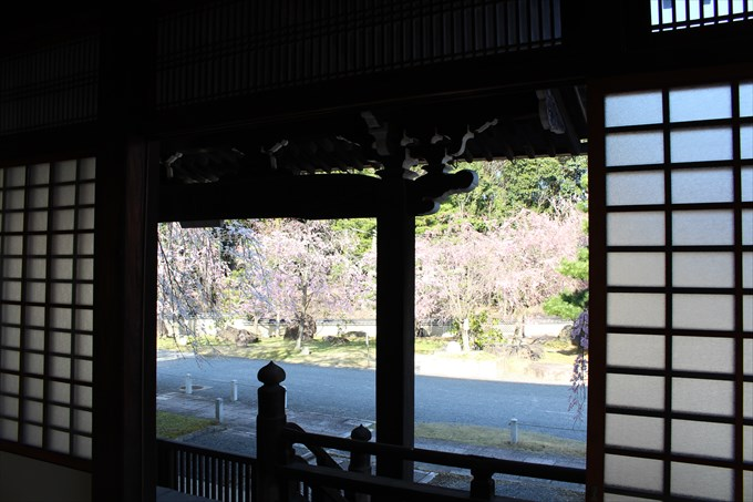 13大書院内部から桜園を眺める