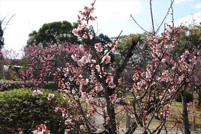 8随心院の梅