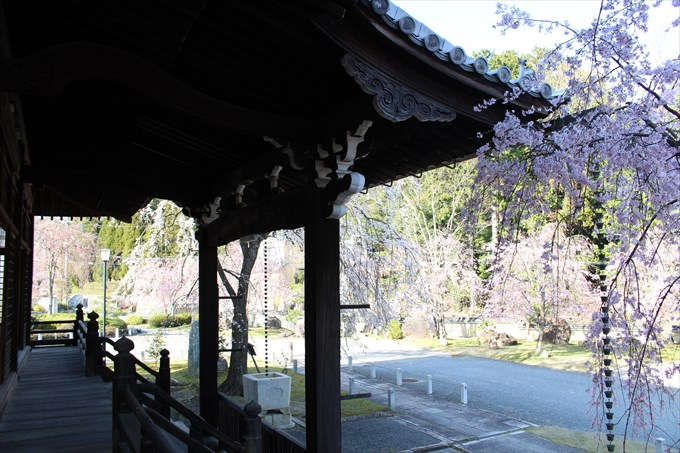 14大書院から桜園を眺める