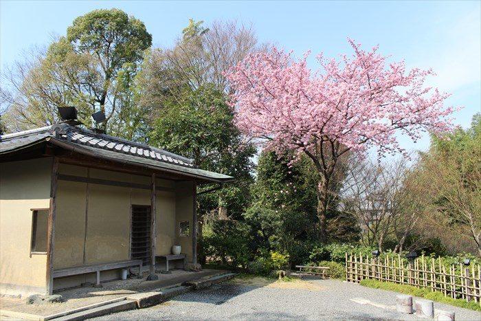 3休憩所と桜