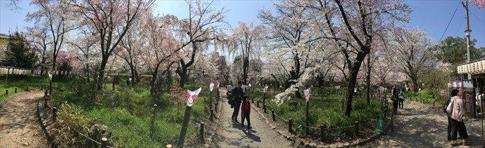 43桜苑をパノラマで