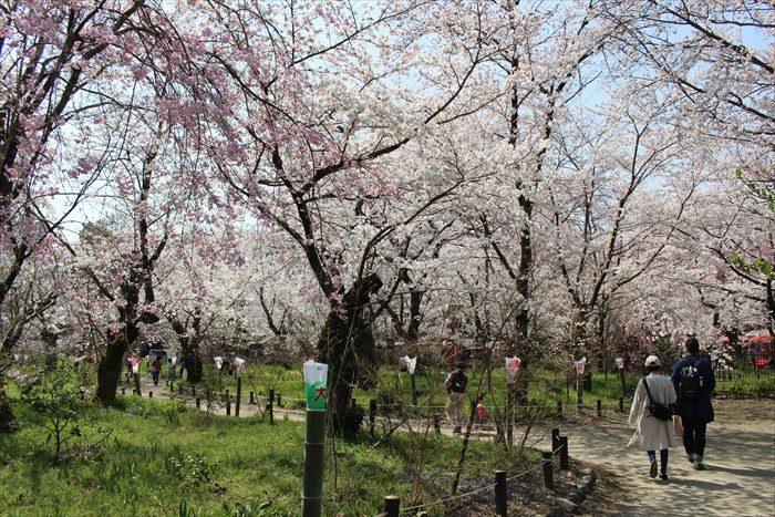 41桜苑入ったところ