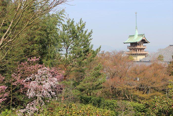 7大雲院の祇園閣と桜
