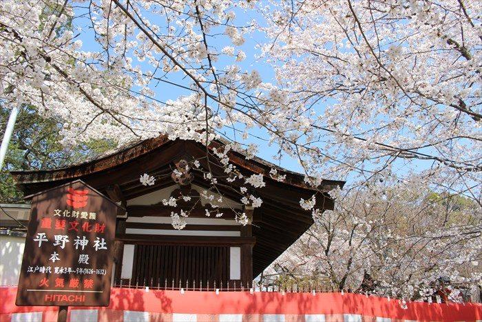 51神門の横の塀と桜