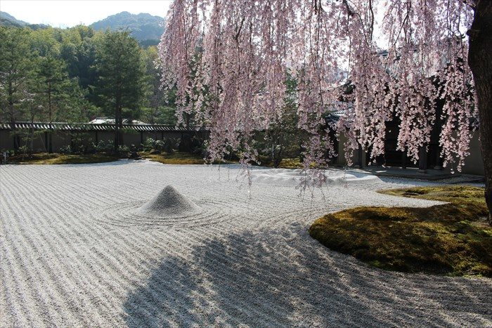 16高台寺の方丈前庭としだれ桜