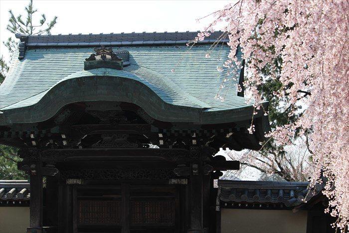 22勅使門アップと桜