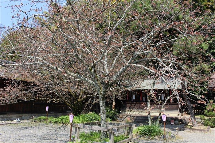 25平野神社の衣笠