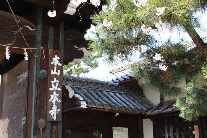 3立本寺正門看板と松
