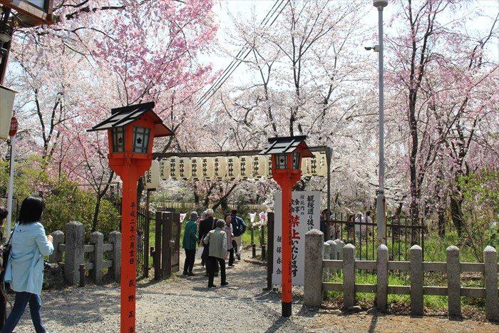 10平野神社桜苑入り口