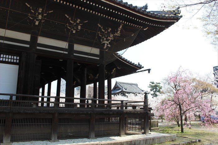 28本堂横と桜