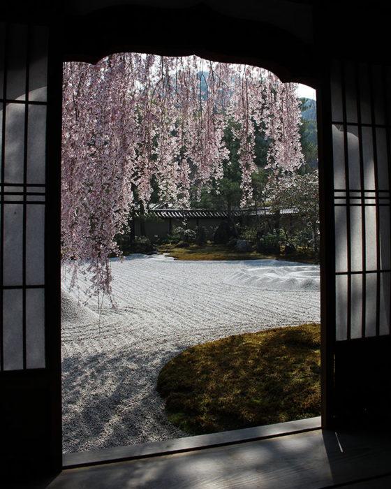 14窓の内側から桜を撮る
