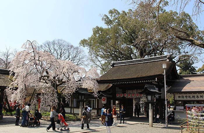 14魁桜と神門を少し離れた場所から
