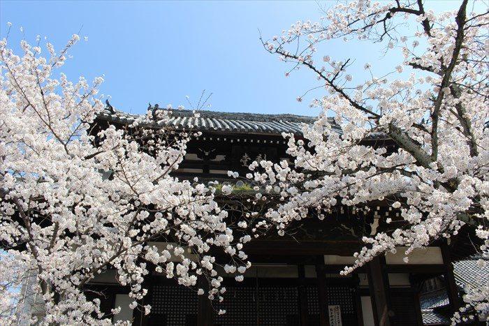 15刹堂(せつどう)と桜
