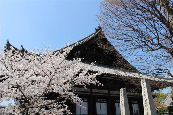 32本堂側面と桜