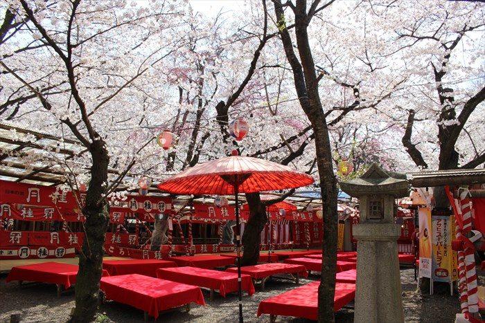 57平野神社の夜桜用の席