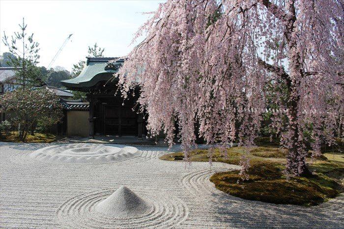 17庭と桜