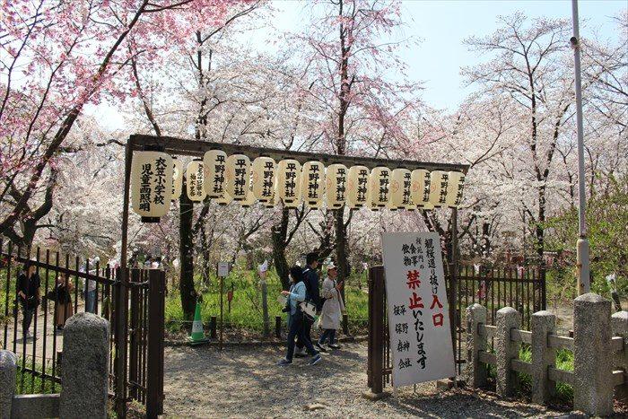 40桜苑の入り口