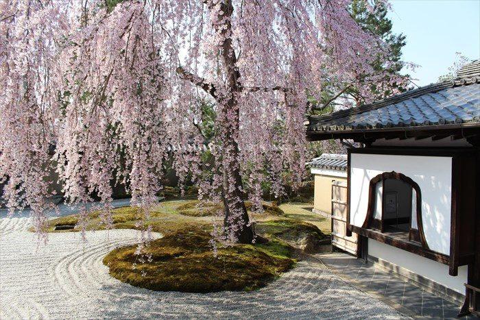 11高台寺の桜と窓アップ