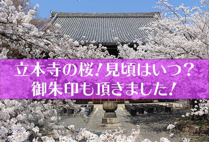 立本寺の桜タイトル