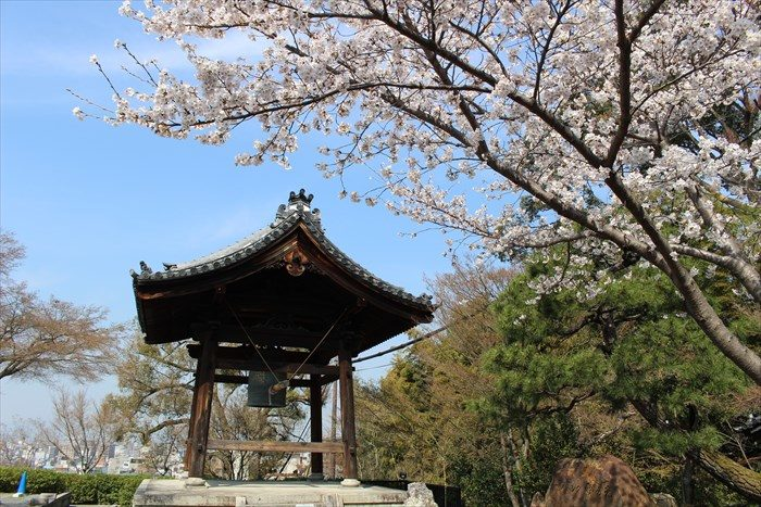 26高台寺の鐘楼と桜